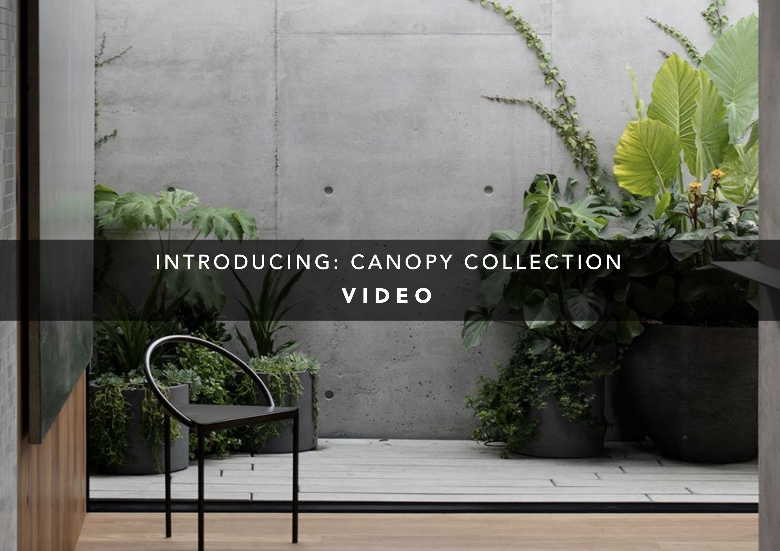 Introducing: Canopy Collection